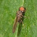 Pipunculidae - Big-headed fly?