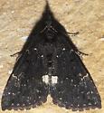 Dimorphic Bomolocha - Hypena bijugalis - male