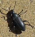 Beetle ID? - Zophobas subnitens