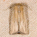 Leucania oregona