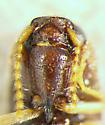 Glyphonyx - Glyphonyx quietus