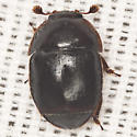 Small Hive Beetle ? - Aethina tumida