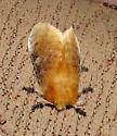 Flannel Moth? - Megalopyge opercularis