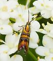Moth? - Tortyra slossonia