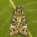 Green Arches - Hodges#11000 - Anaplectoides prasina