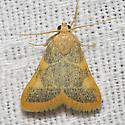 Clover Hayworm - Hodges#5524 - Hypsopygia costalis
