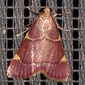 Dolichomia olinalis - Hypsopygia olinalis
