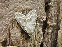 Small Gray Moth
