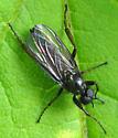Fly - Bibio - male