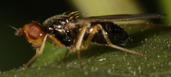 Diptera on a leaf