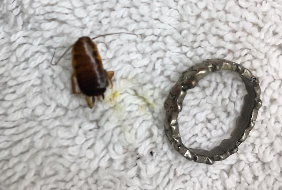 Oh my gosh!  Is this a cockroach??!!