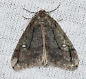 Paleacrita merriccata – White-spotted Cankerworm Moth - Paleacrita merriccata - male
