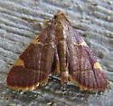 Yellow-fringed Dolichomia - Hypsopygia olinalis
