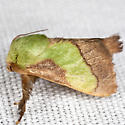 Smaller Parasa - Hodges #4698 - Parasa chloris