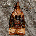 Black-shaded Platynota Moth - Platynota flavedana