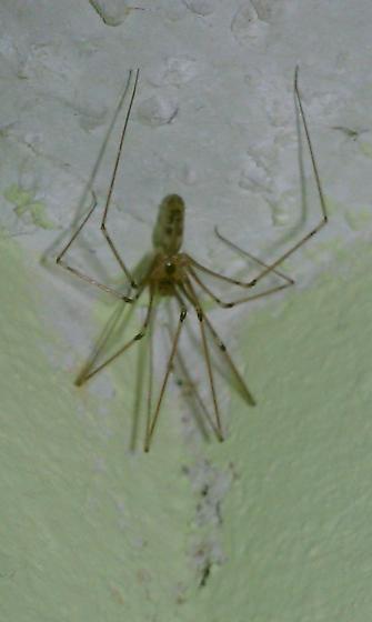 Spider Above My Shower