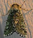 Green Moth - Feralia
