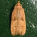 Glyphidoceraseptentrionella-Hodges #1142(Glyphidoceraseptentrionella)  - Glyphidocera septentrionella