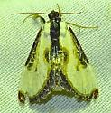 Beautiful Woodnymph - Eudryas grata