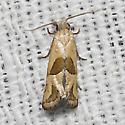 Two-spotted Carolella - Hodges#3783 - Eugnosta sartana