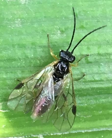 Small wasp?