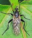 Bibionomorpha ? - Rhamphomyia