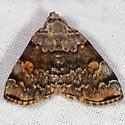 American Idia Moth - Idia americalis