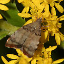 Small Moth - Choreutis pariana