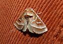 Marsh Fern Moth - Fagitana littera