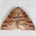 Drepanulatrix falcataria - male