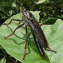 Microstylum morosum