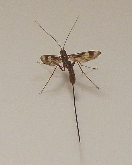What insect looks like a giant mosquito 10