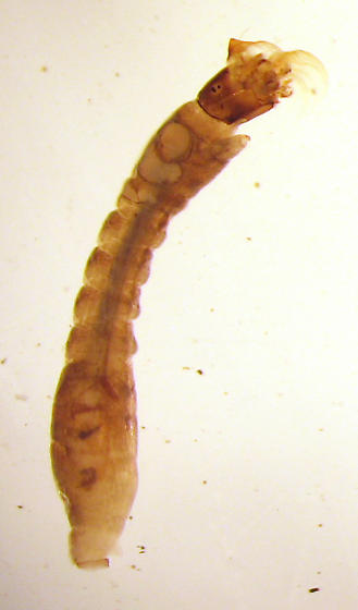 Simuliidae from Indiana
