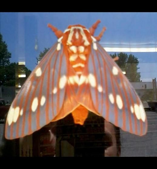 Possible Moth? Large Orange Body, 2 sets of wings, Orange and White markings on body and wings. - Citheronia regalis