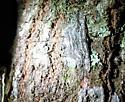 great Geo, ID help please - Iridopsis defectaria