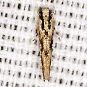 Cosmet Moth - Hodges #1503 - Melanocinclis lineigera