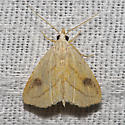 Spotted Grass Moth - Hodges#8404 - Rivula propinqualis