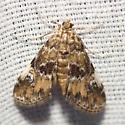 Waterlily Leafcutter Moth - Hodges #4755 - Elophila obliteralis