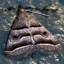 Zanclognatha atrilineella