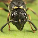Mason Wasp - Parancistrocerus pensylvanicus - female