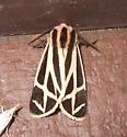 Nais Tiger Moth ? - Apantesis nais