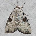 Sappho Underwing - Hodges#8786 - Catocala sappho