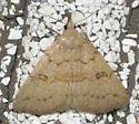 Chytolita morbidalis