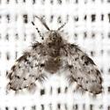Moth Fly - Paramormia