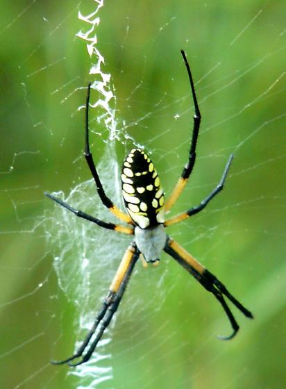 writing spider Writing spider we work exceptionally with native english speaking writers from us, uk, canada and australia that have degrees in different academic fields.