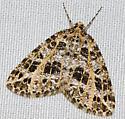 6430 - Orthofidonia flavivenata