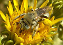 Bee or wasp? - female
