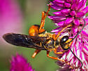 Great Golden Digger Wasp - Sphex ichneumoneus