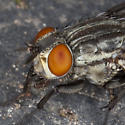 Fly IMG_8990