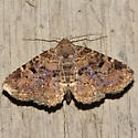 Common Fungus Moth - Hodges #8499 - Metalectra discalis